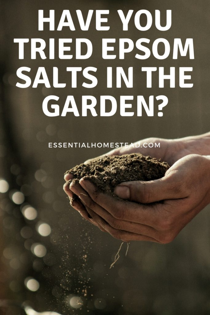 Epsom Salts in the Garden