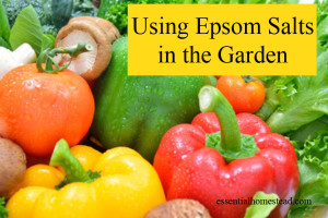 Using Epsom Salts in the Garden