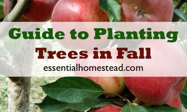 Guide to Planting Trees in Fall | Essential Homestead