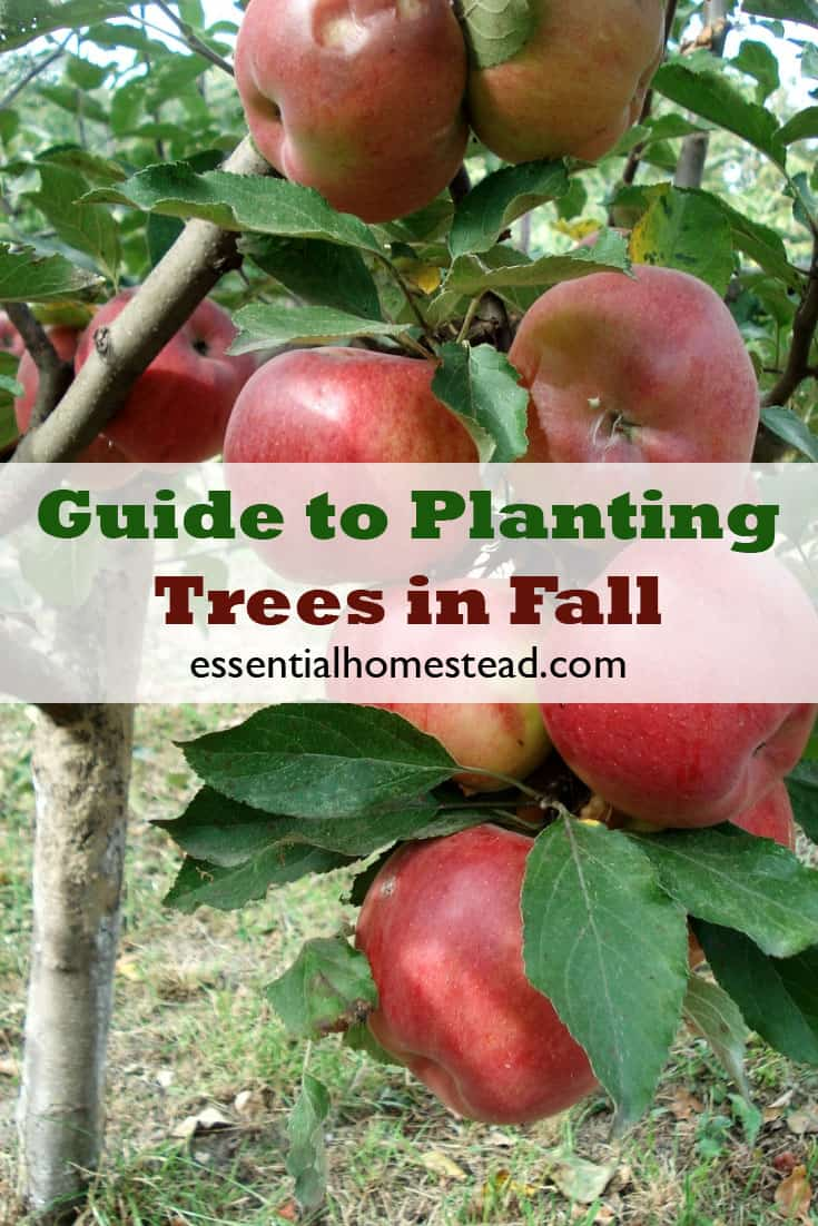 Guide to Planting Trees