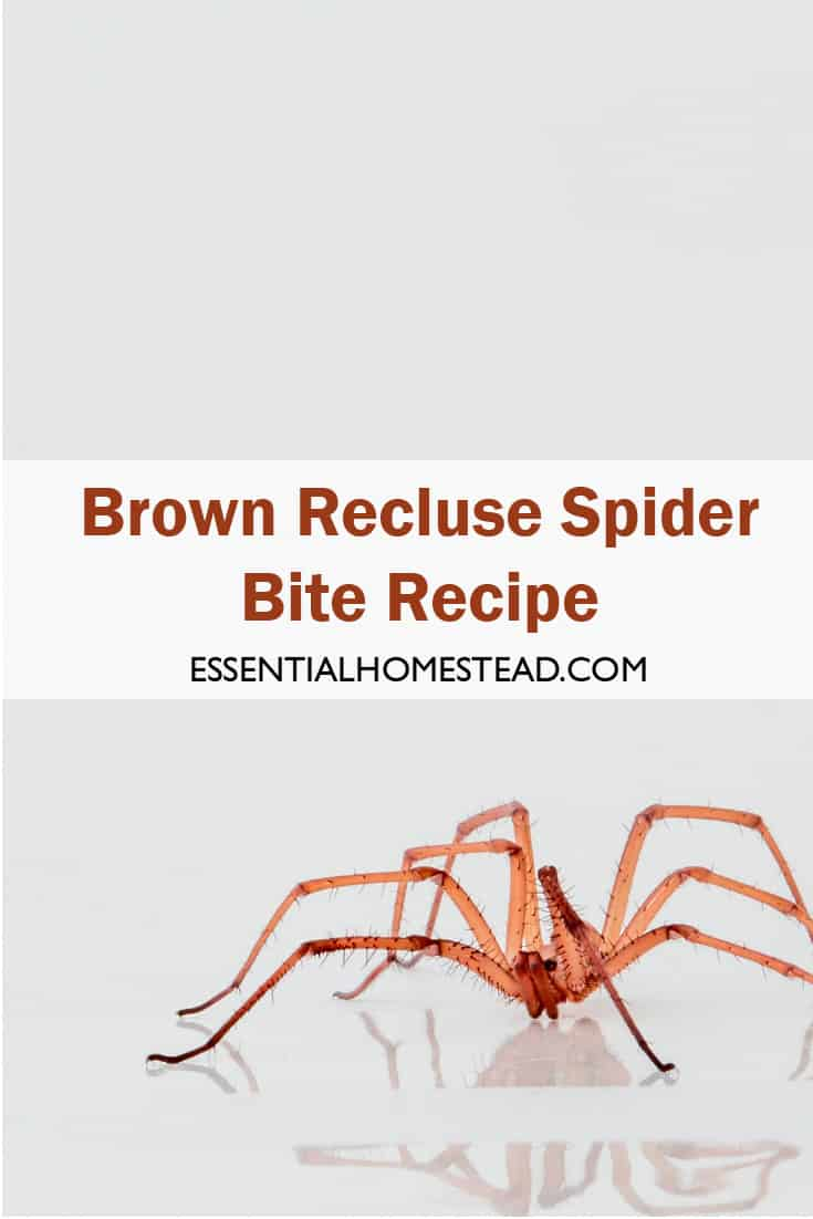 Brown Recluse Spider Bite Recipe