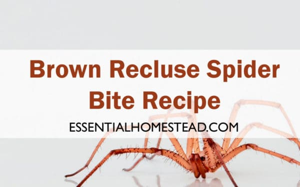Brown Recluse Spider Bite Recipe | Essential Homestead