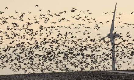 Bird Killers: The Environmental Cost of Being Environmentally Friendly