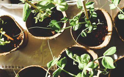 8 Tips to Start an Organic Garden | Essential Homestead