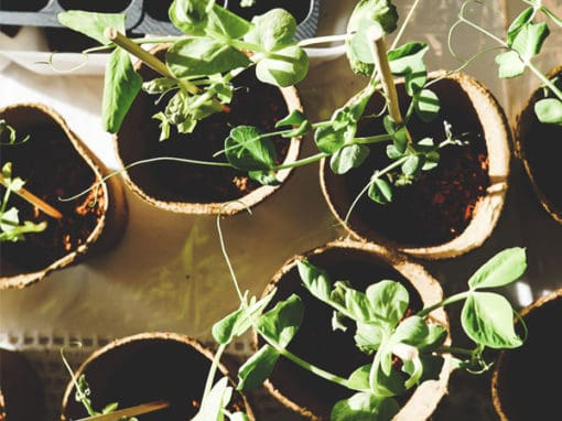 25 Best Gardening Accessories for Women