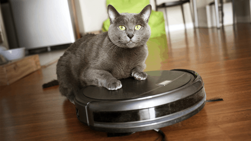 The Absolute Best Vacuum for Pet Hair