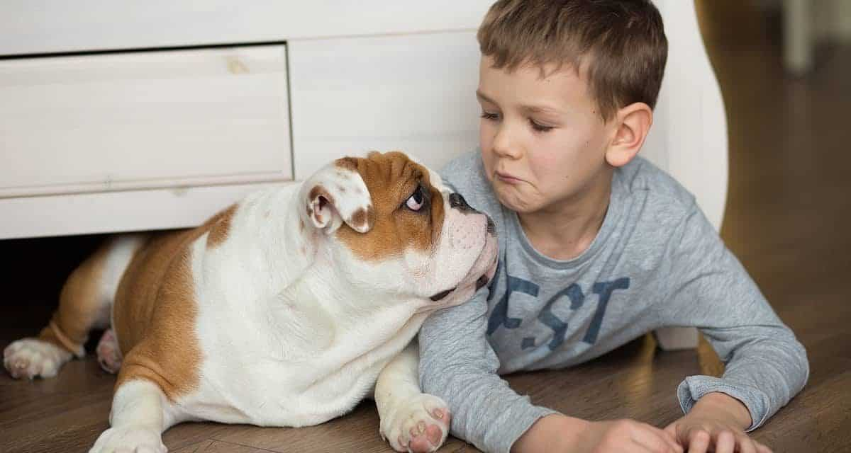 How to Stop an English Bulldog Puppy from Biting
