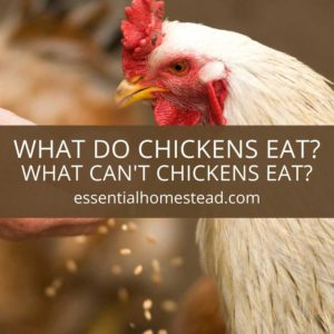 A Complete Guide to the Nutritional Needs of Chickens