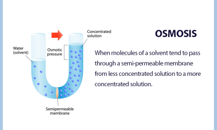 What is Reverse Osmosis and How Does It Work?