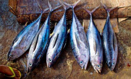 Homemade Tuna Salad Recipe | Essential Homestead