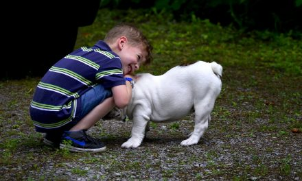 Red Eye on English Bulldog: Here's What To Do
