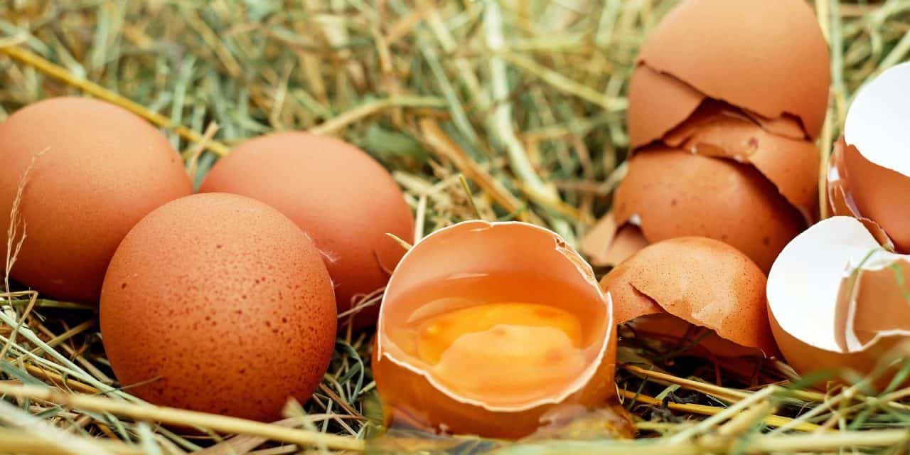 What to Feed Chickens for Strong Eggs | Essential Homestead