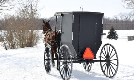 Do Mennonites vote?